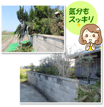 大きくなりすぎた実家の木をスッキリ伐採!