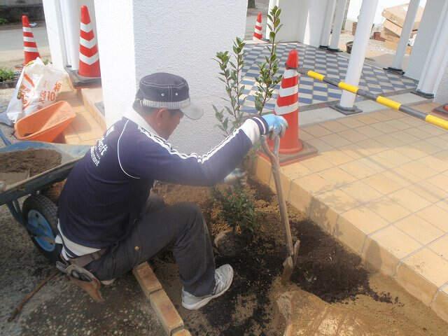 植栽 月桂樹
